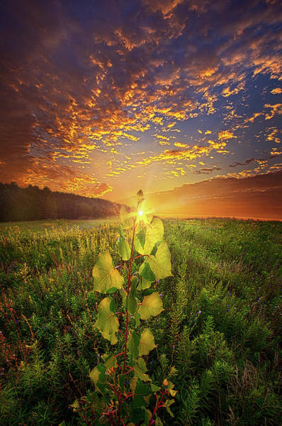 Wall Art - Photograph - Where Nothing Else Matters by Phil Koch