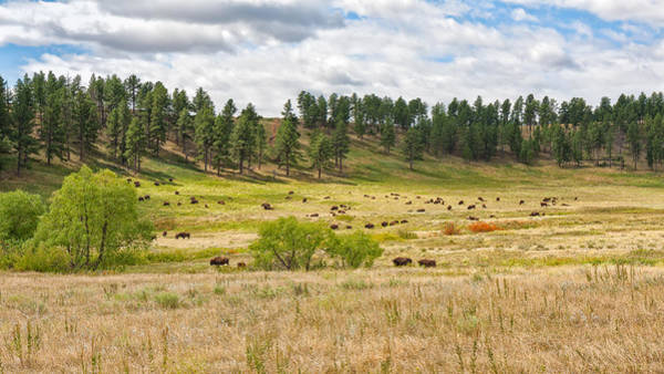 Photograph - Where The Buffalo Roam by John M Bailey