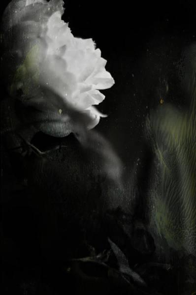 Photograph - Where The Dead Men Dream by Rebecca Sherman