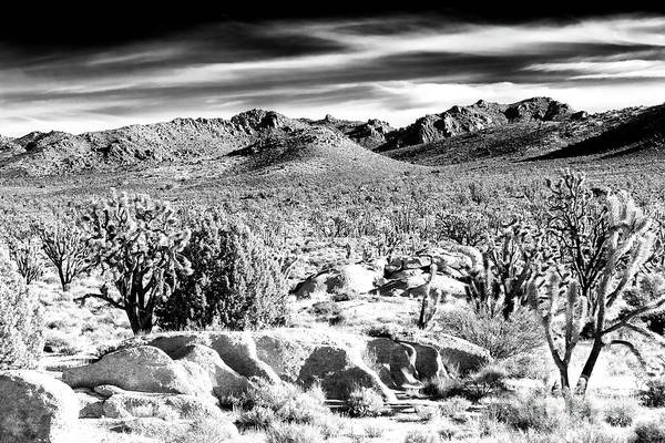 Yucca Palm Photograph - Where The Desert Trees Grow At Mojave National Preserve by John Rizzuto