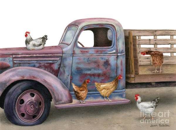 Barnyard Animal Painting - The Flock Spot  by Sarah Batalka
