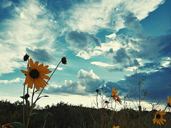 Photograph - Where The Sunflowers Grow by Brad Hodges