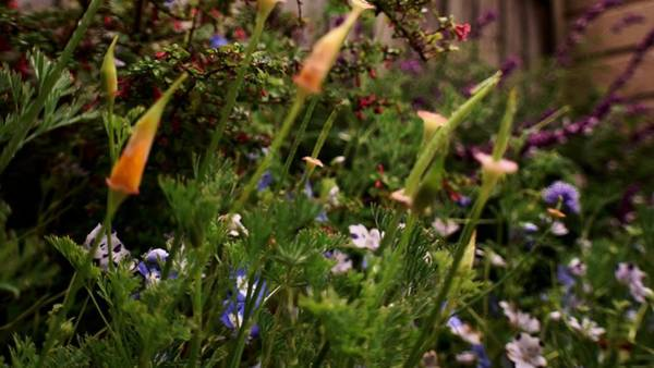 Photograph - Where The Wildflowers Grow by Lynda Anne Williams