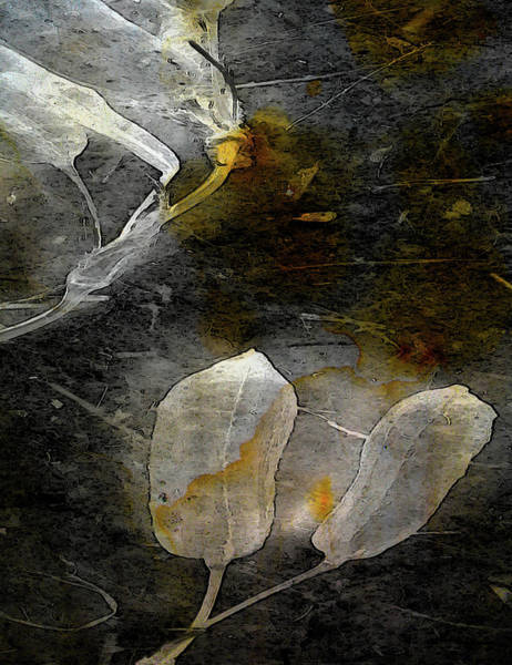 Photograph - Where There Had Been Light IIi by Char Szabo-Perricelli