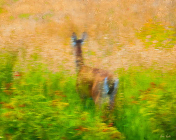Photograph - Where To Deer by Anna Louise
