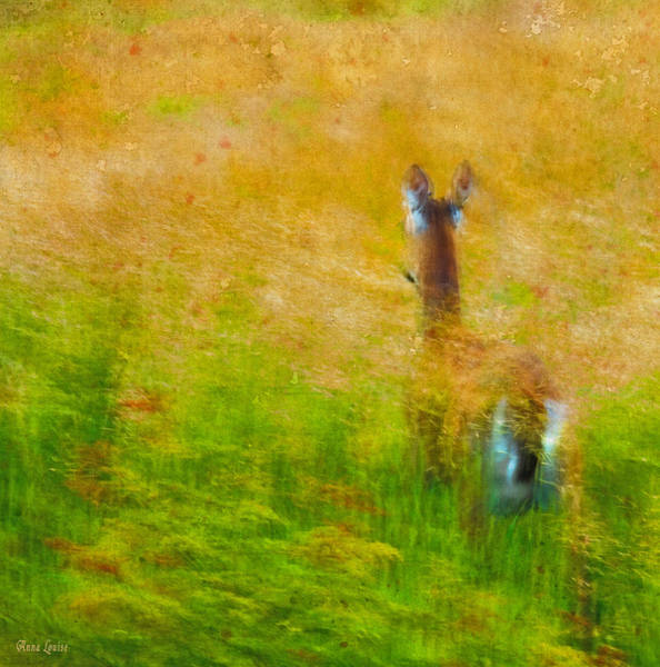Photograph - Where To Deer Two by Anna Louise