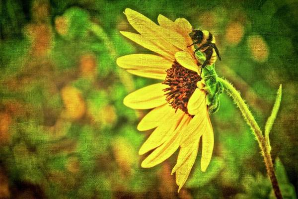 Photograph - Where's The Pollen End Of This Thing by Flying Z Photography by Zayne Diamond