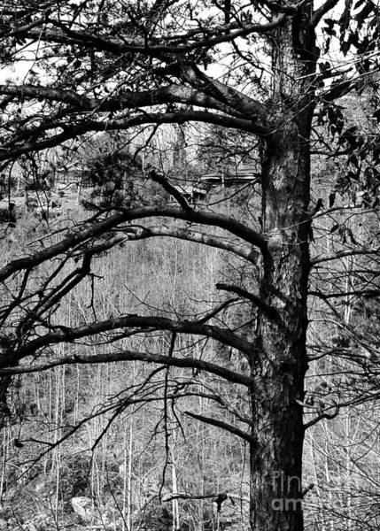 Photograph - Which Way Dear Tree by Rachel Hannah