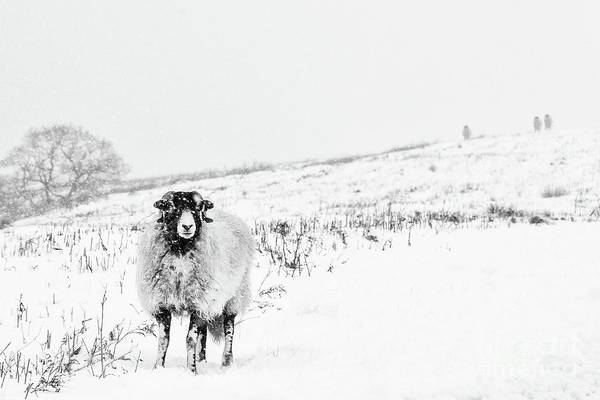 Rural Scene Photograph - Which Way Is South? by Janet Burdon