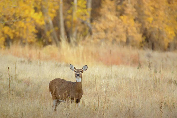 Photograph - While Tail In Autumn by John De Bord