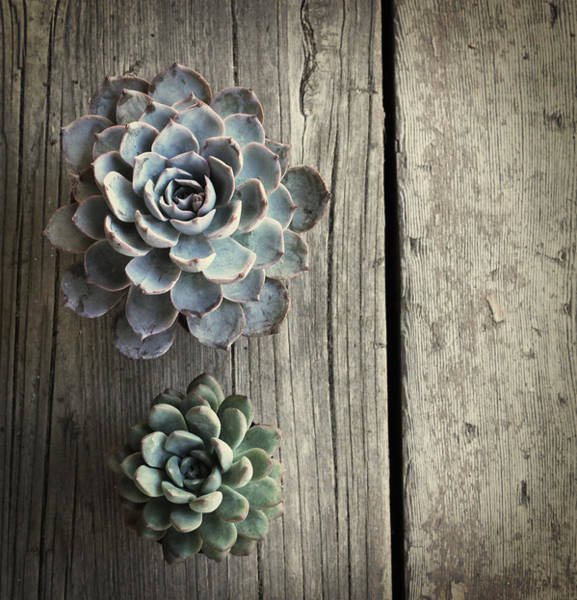 Succulent Photograph - While We Wait by Skye Zambrana