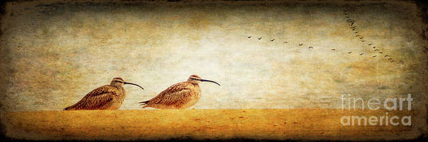 Wall Art - Photograph - Whimbrel Pano by Todd Bielby