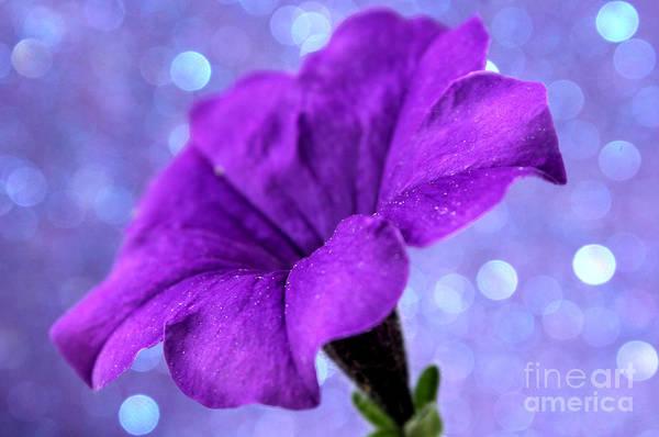 Petunias Photograph - Whimsical Dreams by Krissy Katsimbras