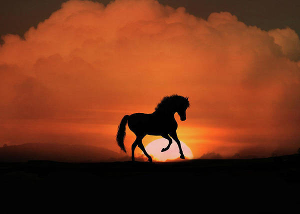 Prancing Horse Photograph - Whimsical Horse And Sunrise by Stephanie Laird