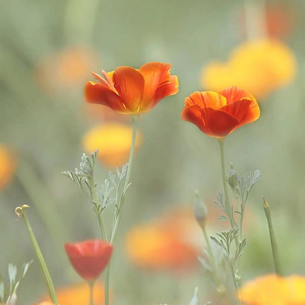 Photograph - Whimsical Summer by Kim Hojnacki