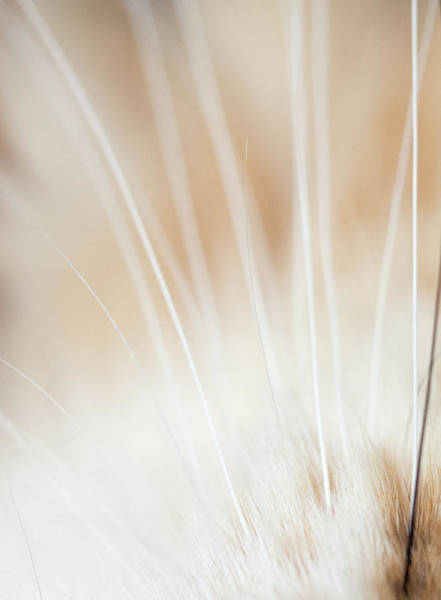 Wall Art - Photograph - Whimsical Whiskers by John Janicki