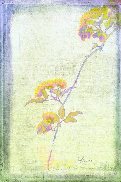 Photograph - Whimsy Roses by Elaine Teague