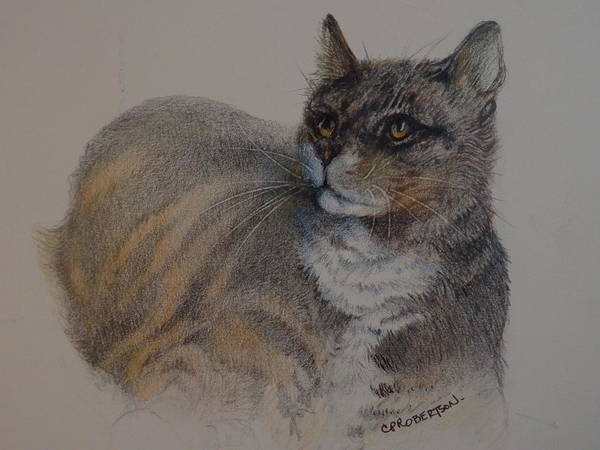 Orange Tabby Drawing - 'whiskey' by Catherine Robertson