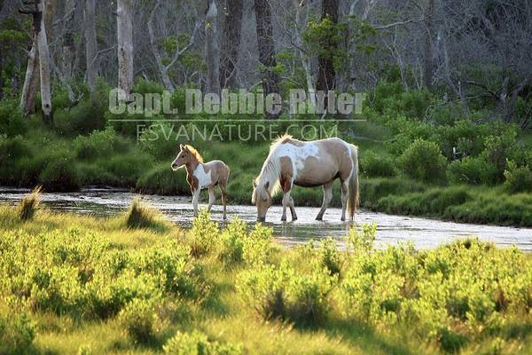Photograph - Whisper Foal With Speckles 7188 by Captain Debbie Ritter