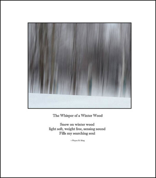 Photograph - Whisper Of A Winter Wood Haiku by Wayne King