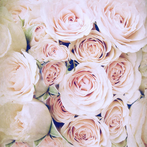 Photograph - Whisper Of Rose by Jessica Jenney