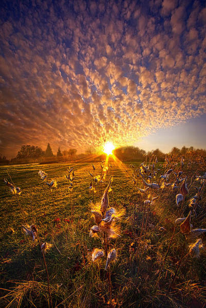 Photograph - Whisper The Wind Into The Light by Phil Koch