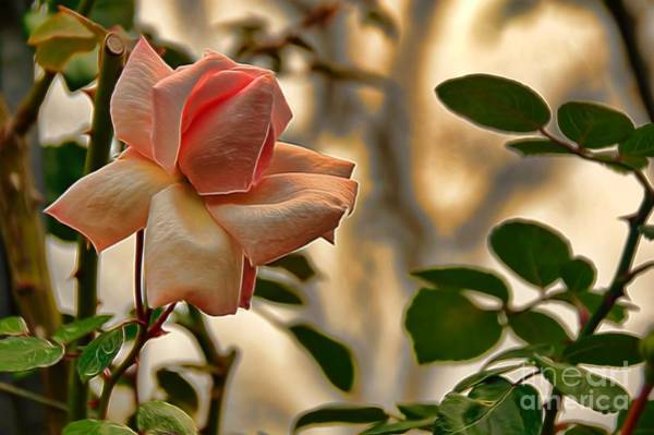 Photograph - Whisper To Me by Diana Mary Sharpton
