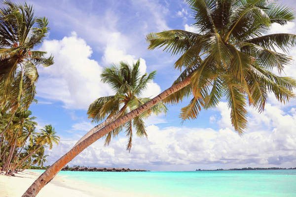 Photograph - Whispering Palms. Maldives by Jenny Rainbow