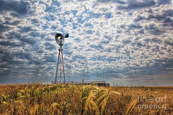 Photograph - Whispering Winds by Jim Garrison
