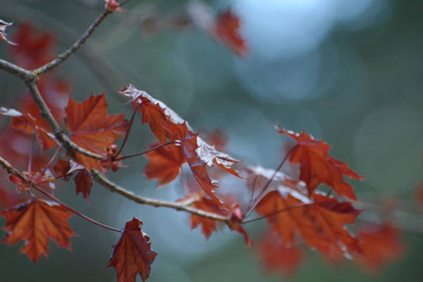 Photograph - Whispers Of Autumn 2 by Fraida Gutovich