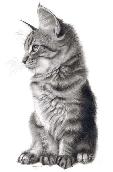 Tabby Drawing - Whistful by Karen Hull
