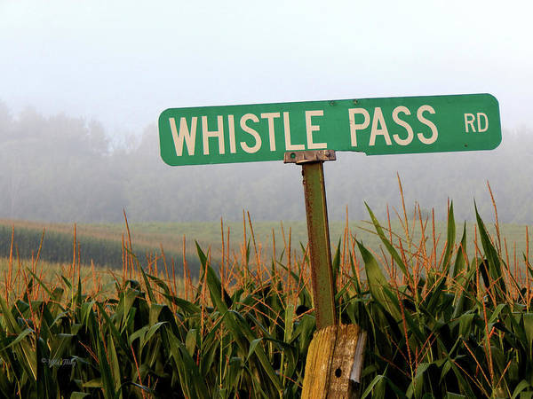 Photograph - Whistle Pass Rd by Wild Thing