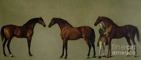 Wall Art - Painting - Whistlejacket And Two Other Stallions With Simon Cobb, The Groom by George Stubbs