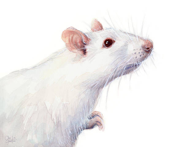Wall Art - Painting - White Albino Rat Watercolor by Olga Shvartsur