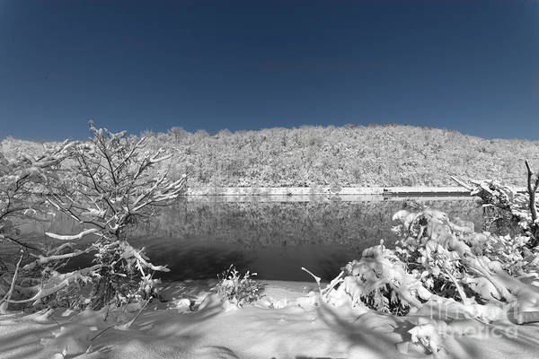 Photograph - White Along The River by Dan Friend