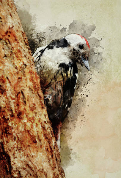 Painting - White And Black Woodpecker by Jaroslaw Blaminsky