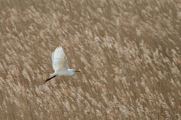 Photograph - White And Gold by Wendy Cooper