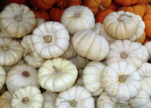Photograph - White And Orange Mini Pumpkins by Carol Groenen