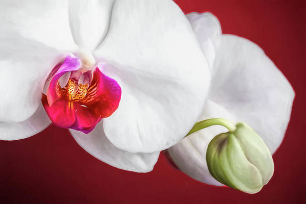 Floral Arrangement Photograph - White And Red Orchids by Tom Mc Nemar