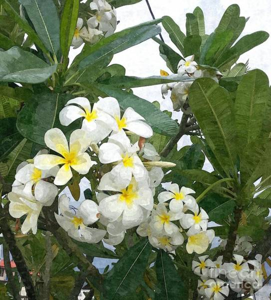 Blooming Tree Mixed Media - White And Yellow Plumeria by Jennifer Capo