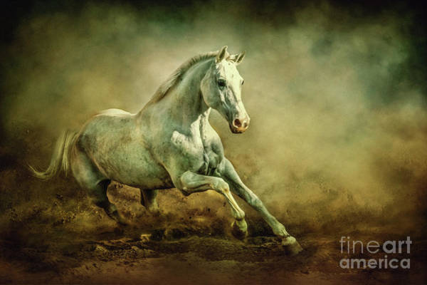 Photograph - White Arabian Stallion Running In Dust by Dimitar Hristov