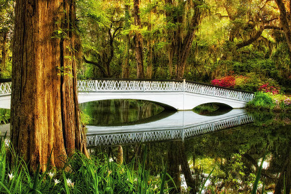 Photograph - White Azalea Bridge by Ken Barrett