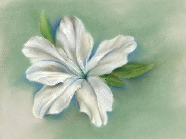 Pastel - White Azalea Flower by MM Anderson