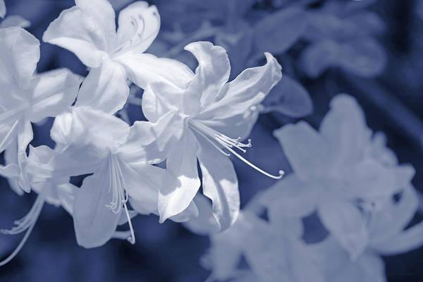 Wall Art - Photograph - White Azalea Flowers Blues by Jennie Marie Schell