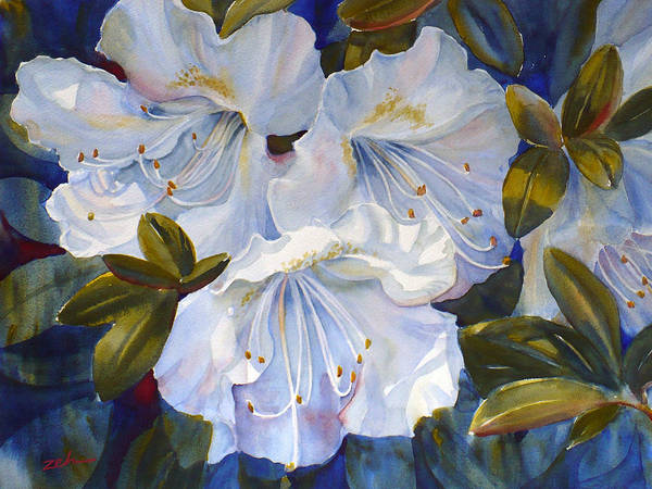 Painting - White Azaleas by Janet Zeh