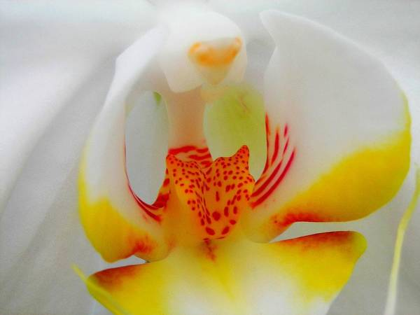 Blume Photograph - White Beauty by Juergen Weiss
