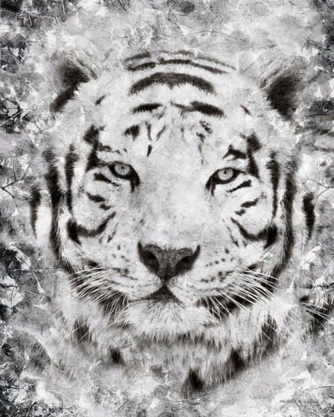 Photograph - White Bengal Tiger Portrait by Michele A Loftus