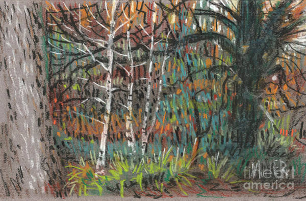 Autumn Drawing - White Birch by Donald Maier