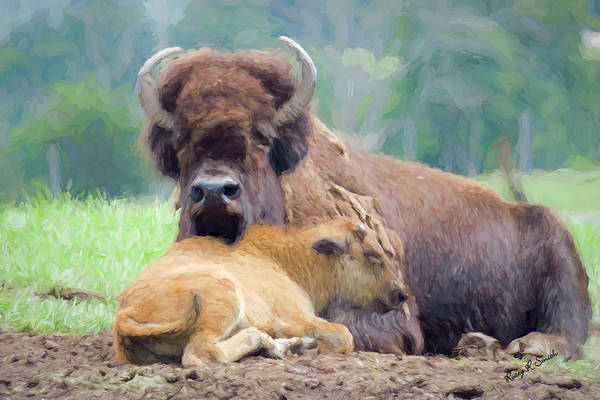 Digital Art - White Bison And Calf by Rusty R Smith