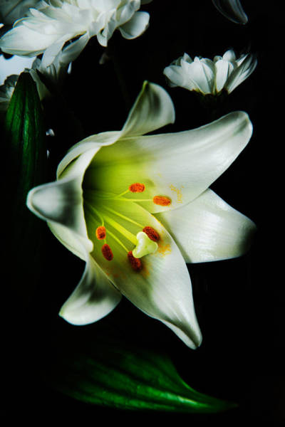 Photograph - White Blooming Lily by Dennis Dame